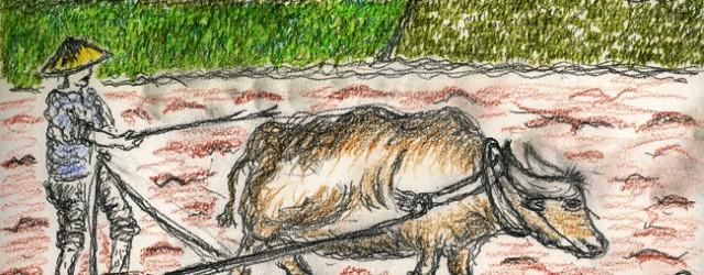"""Voici comment le paysan vietnamien nomme sa patrie : """"Đất nước"""", ce qui veut dire """"terre et eau"""". Pour lui, son terroir représente ce constant brassage de la terre (Đất...<div class=""""addthis_toolbox addthis_default_style addthis_"""" addthis:url='http://ba-noi.com/blog/le-paysan-vietnamien/' addthis:title='Le paysan vietnamien ' ><a class=""""addthis_button_preferred_1""""></a><a class=""""addthis_button_preferred_2""""></a><a class=""""addthis_button_preferred_3""""></a><a class=""""addthis_button_preferred_4""""></a><a class=""""addthis_button_compact""""></a></div>"""