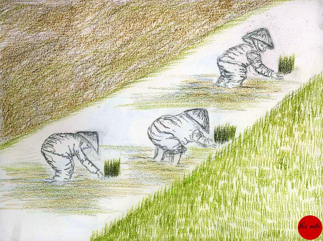 rizieres-3-paysans Paysages Vietnam