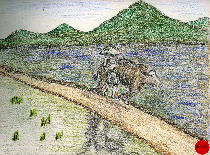 paysage-vietnam-rizieres-buffle-paysan
